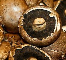 Fungi by Guatemwc