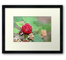 Raspberries! Framed Print