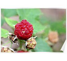 Raspberries! Poster