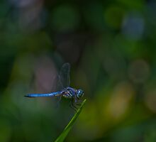 Dragonfly with Abstract Background by photojeanic