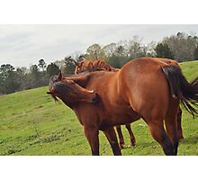 Brown Horse  Photographic Print
