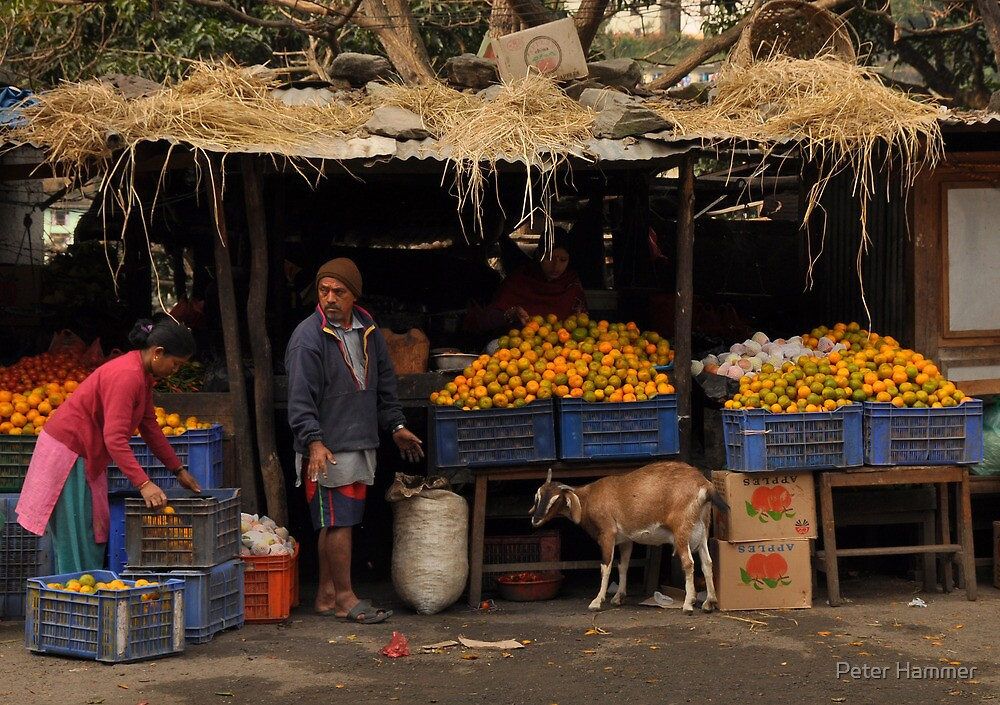 The Orange Stall by Peter Hammer