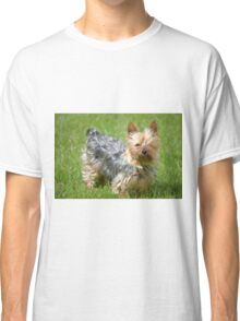 mini yorkie dog on the grass Classic T-Shirt