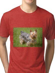 mini yorkie dog on the grass Tri-blend T-Shirt