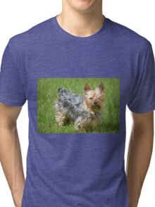 mini yorkie dog on the grass Tri-blend T-Shirt