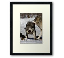 Back off! - Timber Wolf Framed Print