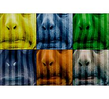 Warhol meets Vasarely II - Pig brother Photographic Print