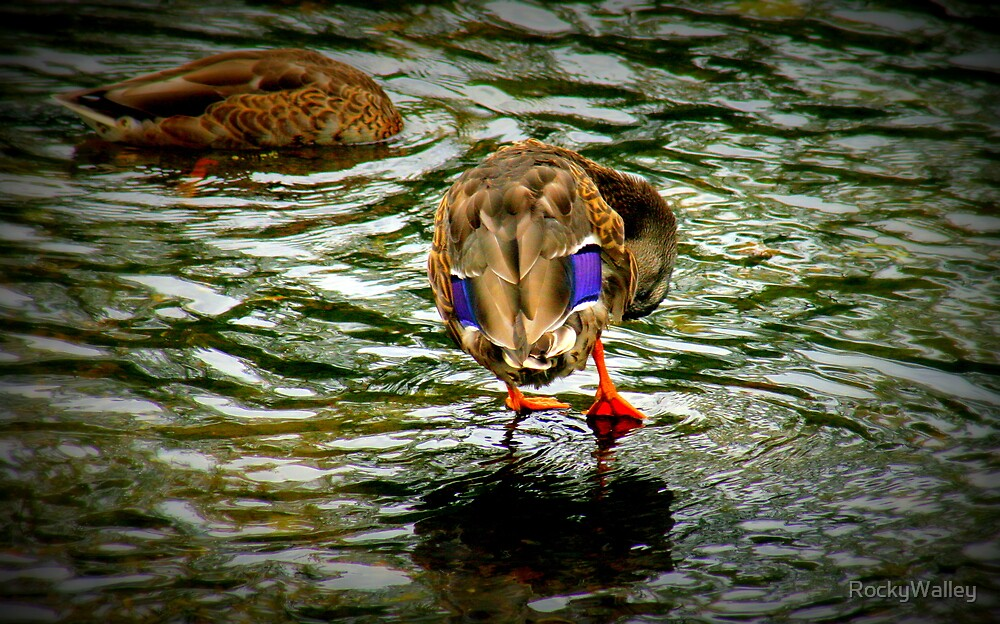 Walking On Water by RockyWalley
