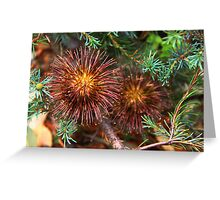 Banksia violacea Greeting Card