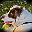A Dog Park Friend by scenebyawoman