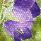 Canterbury bells by Photos - Pauline Wherrell