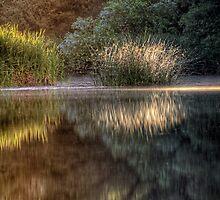 Foliage Face Off by Bob Larson