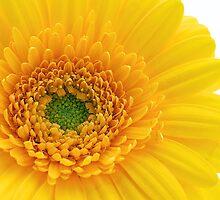 Vibrant Yellow by fernblacker