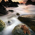 Starfish at Cape Foulwind by Francis Carmine