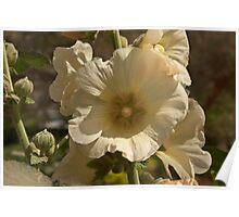 Single white flower inside a garden Poster