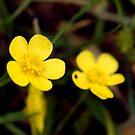 Highland Flowers by Pamela Rose Sime