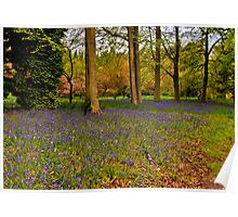 Down in Bluebell Wood Poster