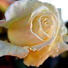 Peaches & Cream by Rocksygal52