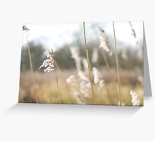 Waving in the breeze Greeting Card