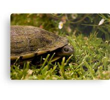 Peeking Tortoise Metal Print
