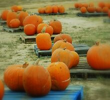 pumpkin patch  by totorohappy1984