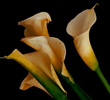 CALLA LILIES by Thomas Barker-Detwiler