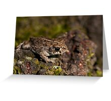 Natterjack Toad  Greeting Card