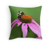 Bee on Purple Coneflower Throw Pillow