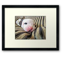 Irresistible~  Framed Print