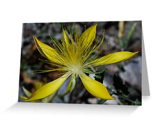 Giant Blazing Star Greeting Card