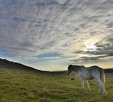 Cornwall: Lone Pony by Rob Parsons