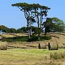 Beddingham Hay Bales by mikebov