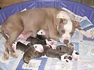 Dream Has Puppies by Ginny York