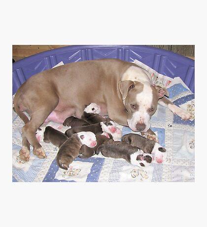Dream Has Puppies Photographic Print