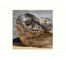 Peek-A-Boo Seal Art Print