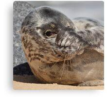 Peek-A-Boo Seal Metal Print
