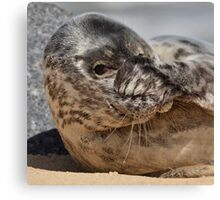 Peek-A-Boo Seal Canvas Print