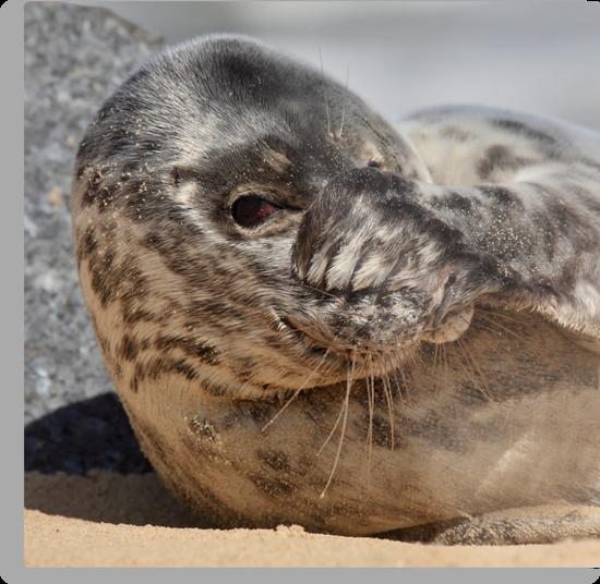 Peek-A-Boo Seal by Patricia Jacobs CPAGB LRPS BPE3