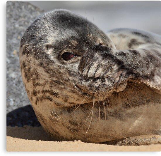 Peek-A-Boo Seal by Patricia Jacobs CPAGB LRPS BPE4