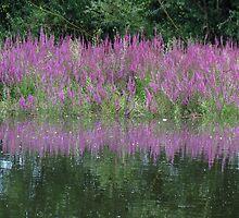 Purple reflection by Peter Wiggerman