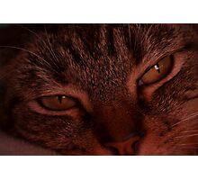 Cat Nap Photographic Print