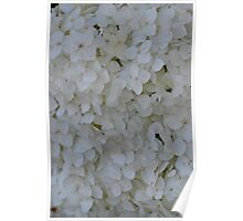 White Carpet by Nature Poster