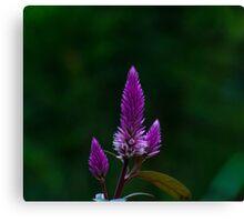 Purple spike Canvas Print