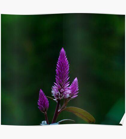 Purple spike Poster