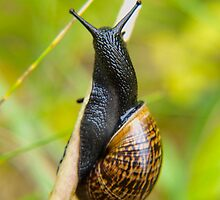 Snail on straw by Arve Bettum