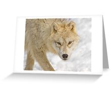 Cold Stare Greeting Card