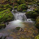 Rinadena Creek by Damon Colbeck