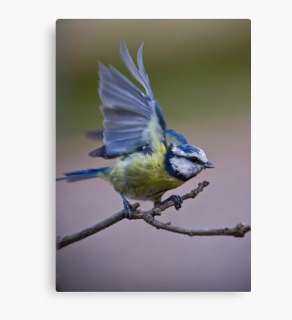 Check it out- New wings! Canvas Print