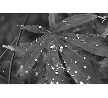 Snowflakes on a Leaf Photographic Print