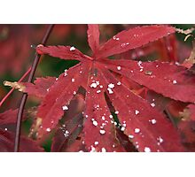 Snowflakes on a Leaf - Color Photographic Print